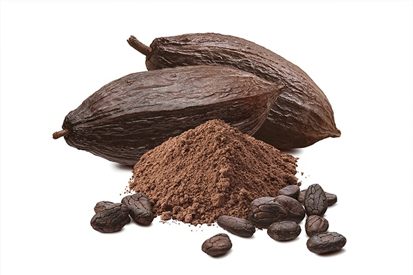 learn how about cocoa bean become chocolate